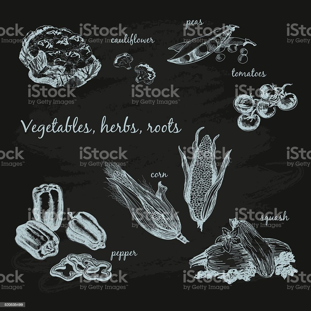 Vegetables, herb and roots. vector art illustration