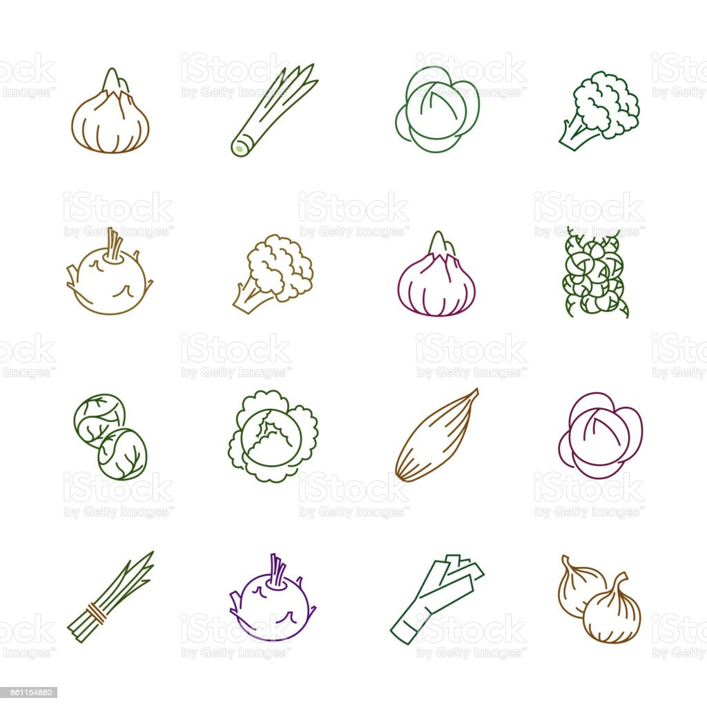 Vegetables icons - Onion, cabbage and cauliflower Vegetables icons. Vegetables vector illustration. Vegetables and seasoning in outline style. Vegetarian food signs. Professional vector icons for vegetables and spices. Brassica rapa stock vector