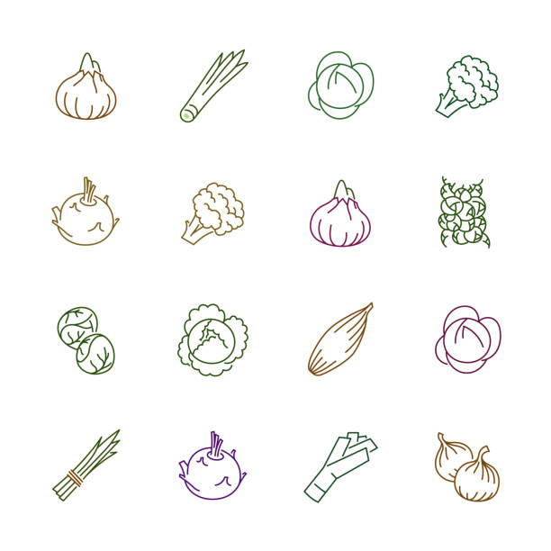 Vegetables icons - Onion, cabbage and cauliflower Vegetables icons. Vegetables vector illustration. Vegetables and seasoning in outline style. Vegetarian food signs. Professional vector icons for vegetables and spices. scallion stock illustrations