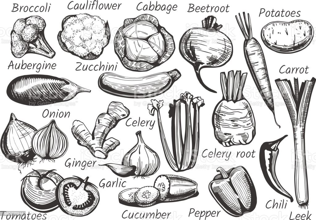 Vegetables in ink drawn style vector art illustration