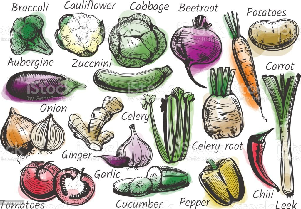 Vegetables in ink drawn style with watercolor vector art illustration