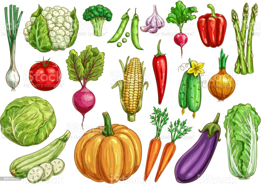 Vegetables Isolated Sketch Set With Fresh Veggies Stock ...