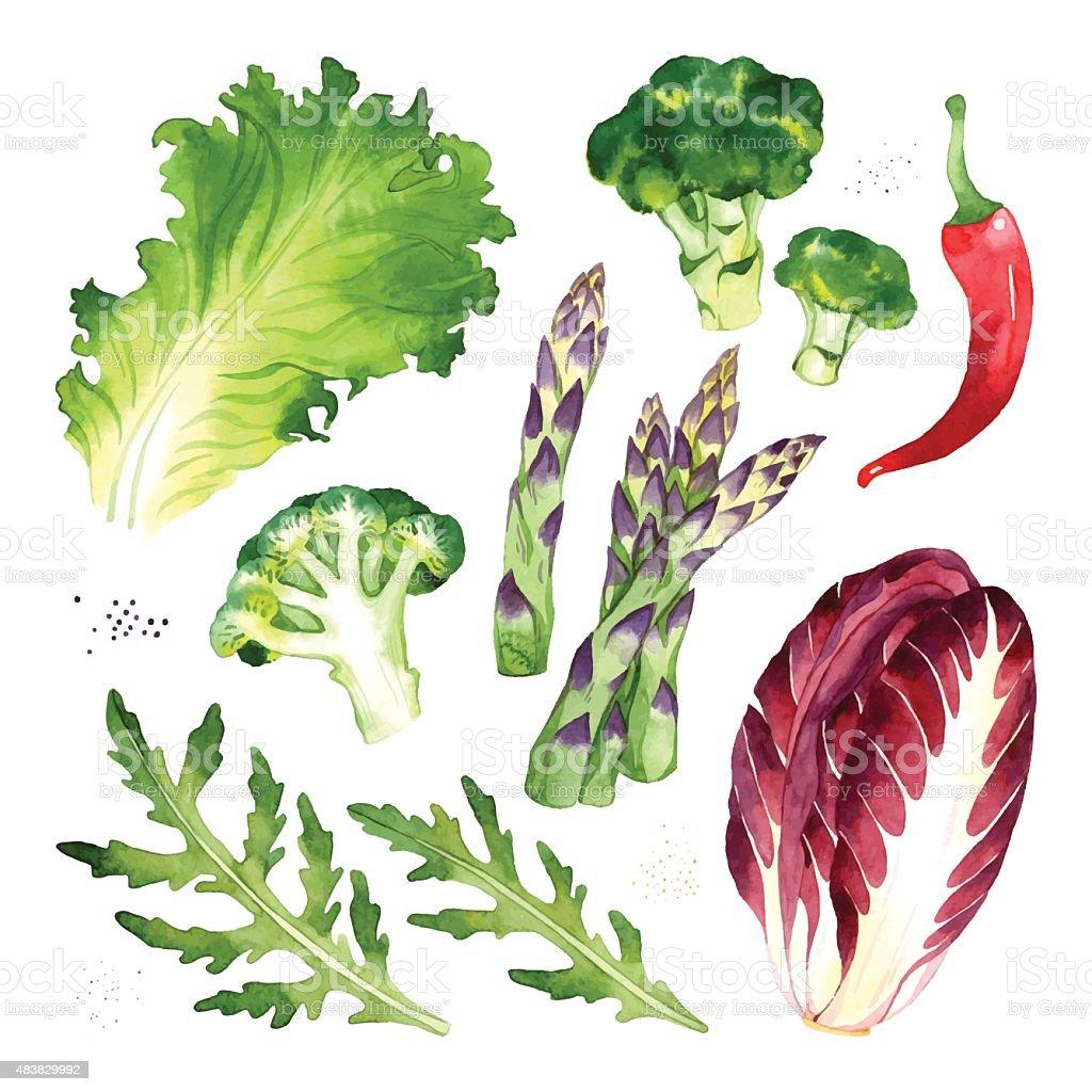 Vegetables set vector art illustration