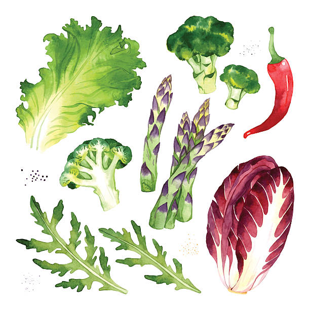 Vegetables set Watercolor vector vegetables set with lettuce, broccoli, pepper, asparagus, arugula, radicchio asparagus stock illustrations