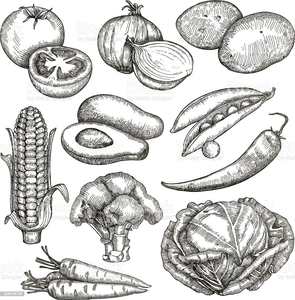 Légumes, croquis, dessin à la main - Illustration vectorielle