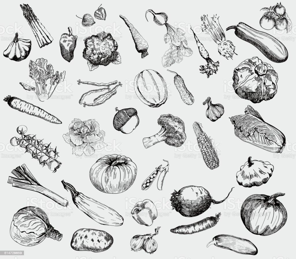 vegetables vector hand drawn vector art illustration
