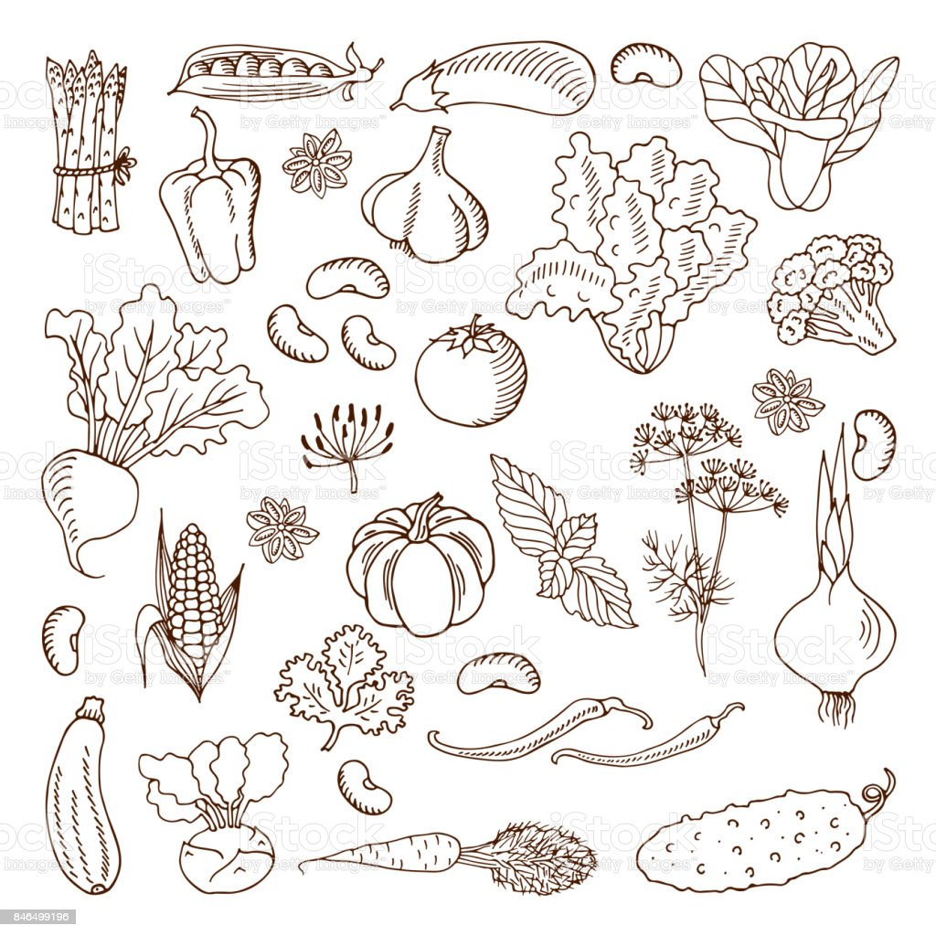 Vegetables. Vector illustration.Design elements. vector art illustration