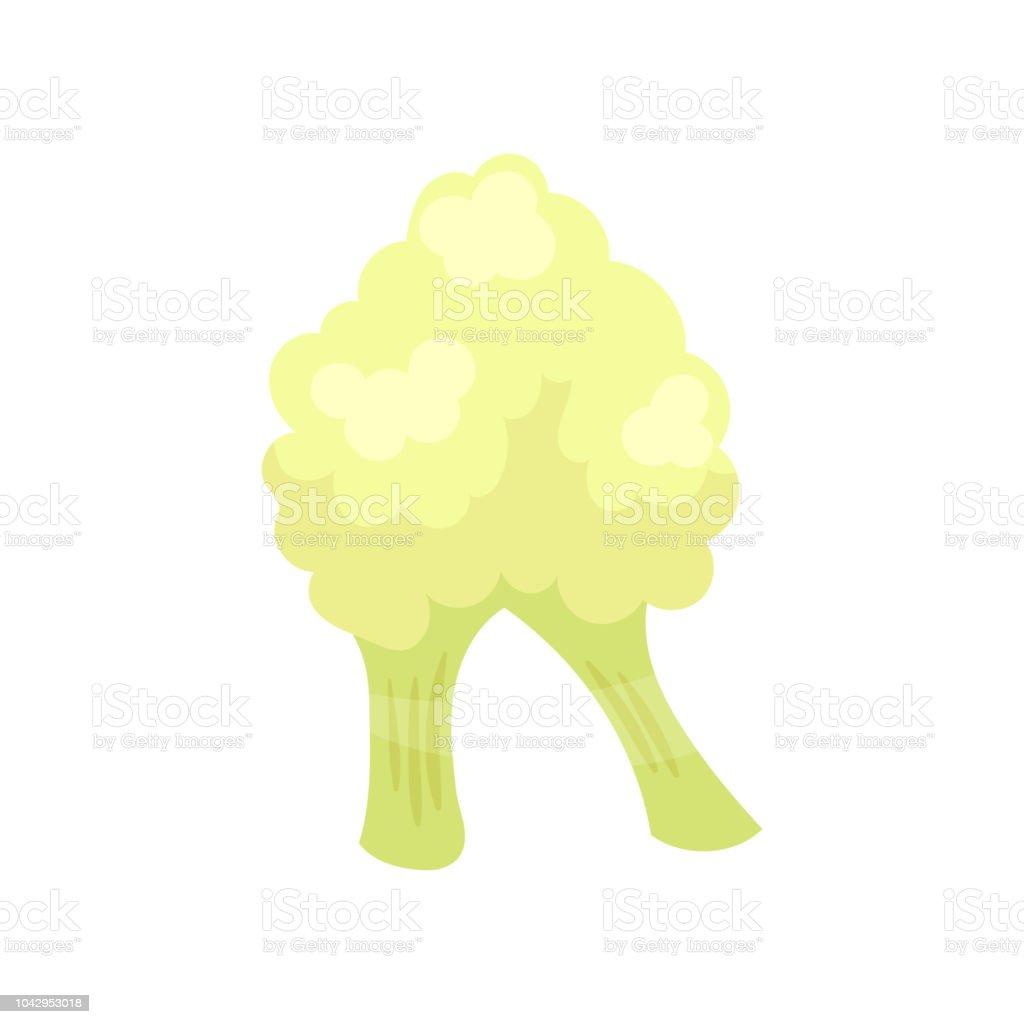 R veggie vegetable English alphabet letter made from cauliflower vector Illustration on a white background vector art illustration