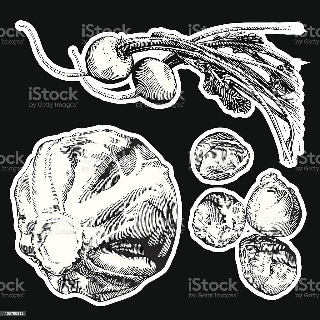 Veggies, Ink Drawing vector art illustration