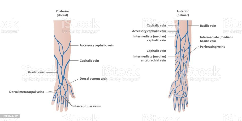 Vein plotting in the arm  illustration vector on white background. Medical concept. vector art illustration