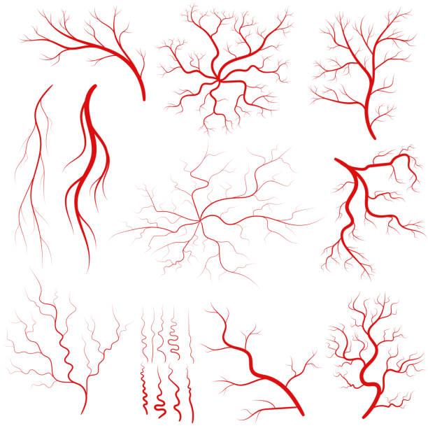 Vein set, Human vessel, eye veins vector vector art illustration