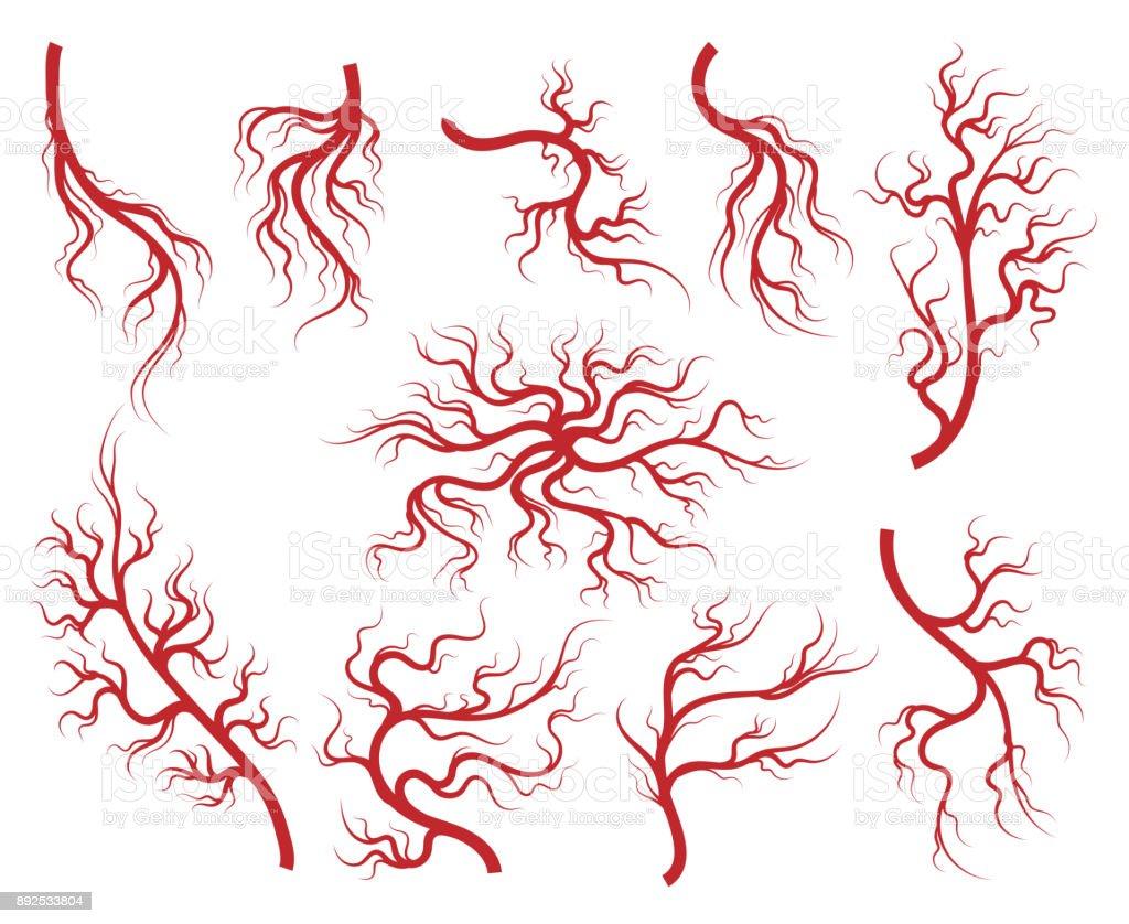 Veins and capillary icons set vector art illustration