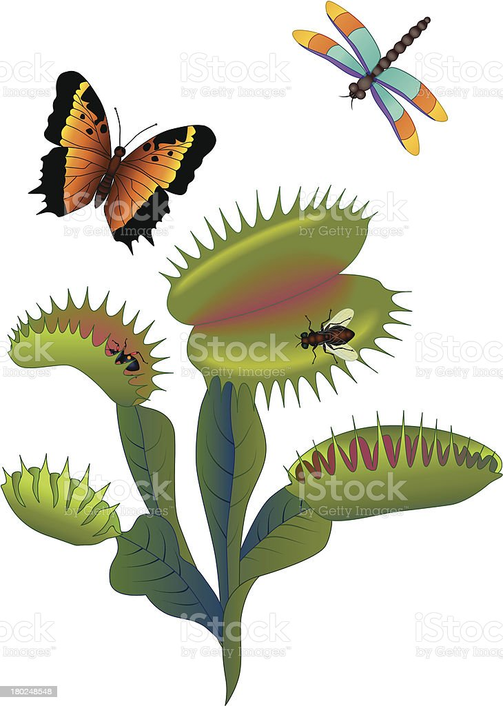 Venus fly trap and insects royalty-free stock vector art