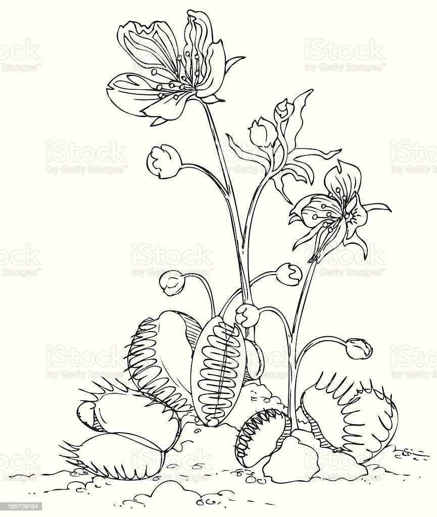 Venus Fly Trap In Black And White Stock Vector Art & More Images of ...