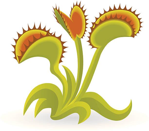 Royalty Free Venus Flytrap Clip Art, Vector Images ...