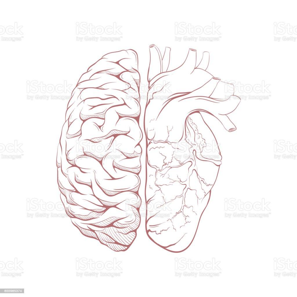 Im Vergleich Zu Buchstaben Menschliche Gehirn Rechte Und Linke ...