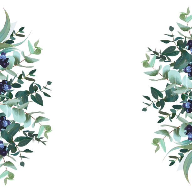 Vertical sides botanical vector design banner Vertical sides botanical vector design banner.Parvifolia, true blue eucalyptus and black berry. Winter set. Hand drawn branches composition isolated on white background. All elements are editable fruit borders stock illustrations