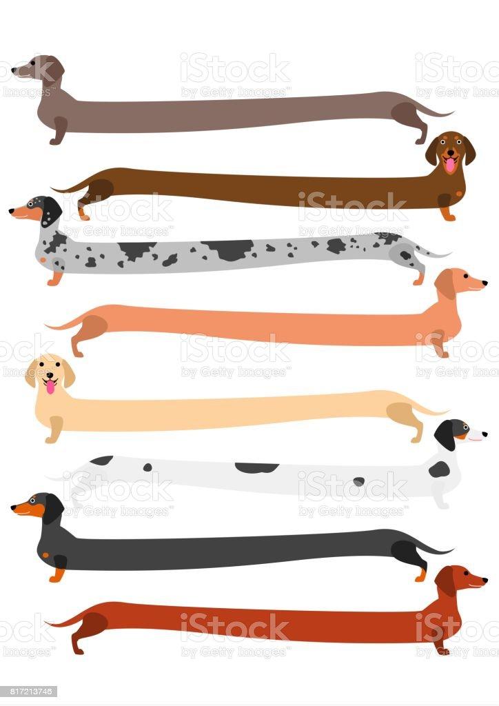 very long colorful Dachshund set vector art illustration