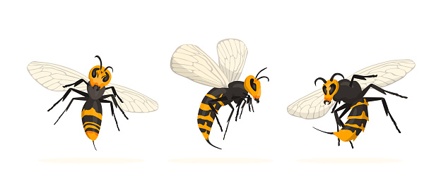 Vespa Mandarinia - Murder Hornet set.