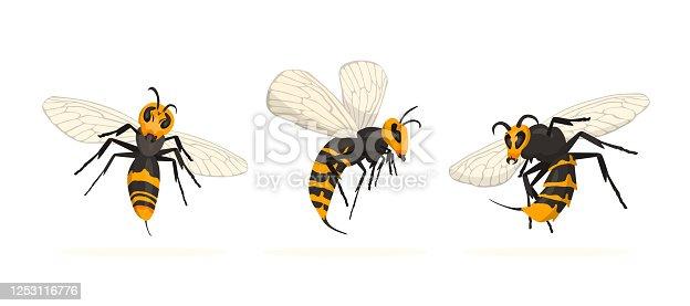 istock Vespa Mandarinia - Murder Hornet set. 1253116776