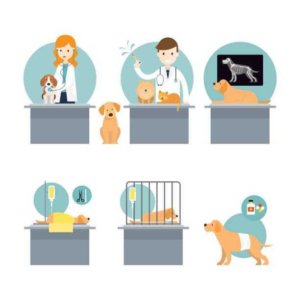 獣医師の診断と世話の病気ペット ベクターアートイラスト