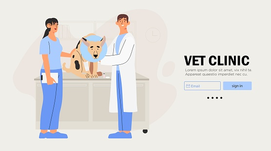 Veterinarians doctor and a nurse examining dog. Creative banner, flyer, landing page or a blog post for a vet clinic, veterinary office or hospital.