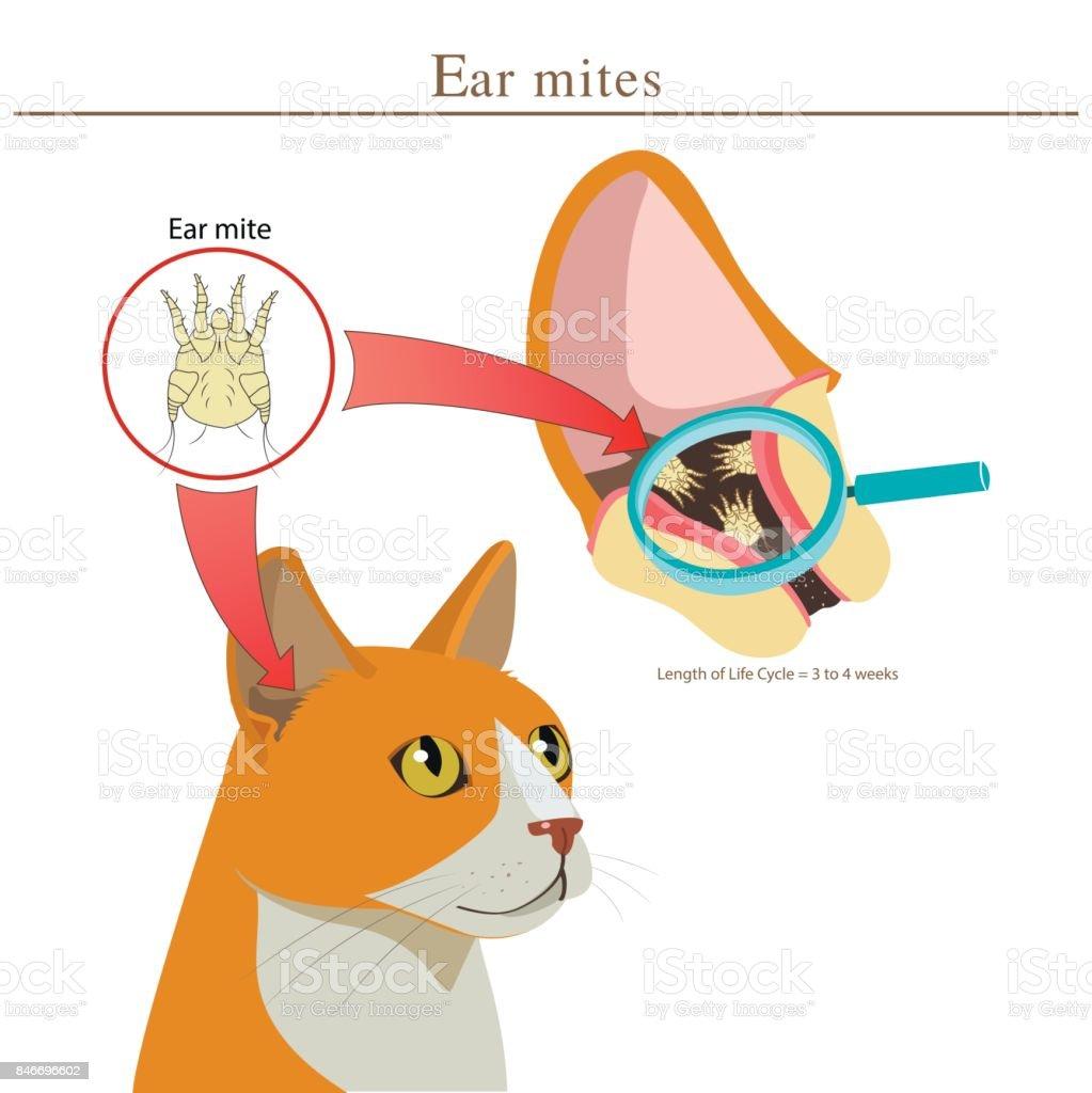 獣医猫耳たにはベクトル イラストです動物の耳たにです感染の広がり - 1
