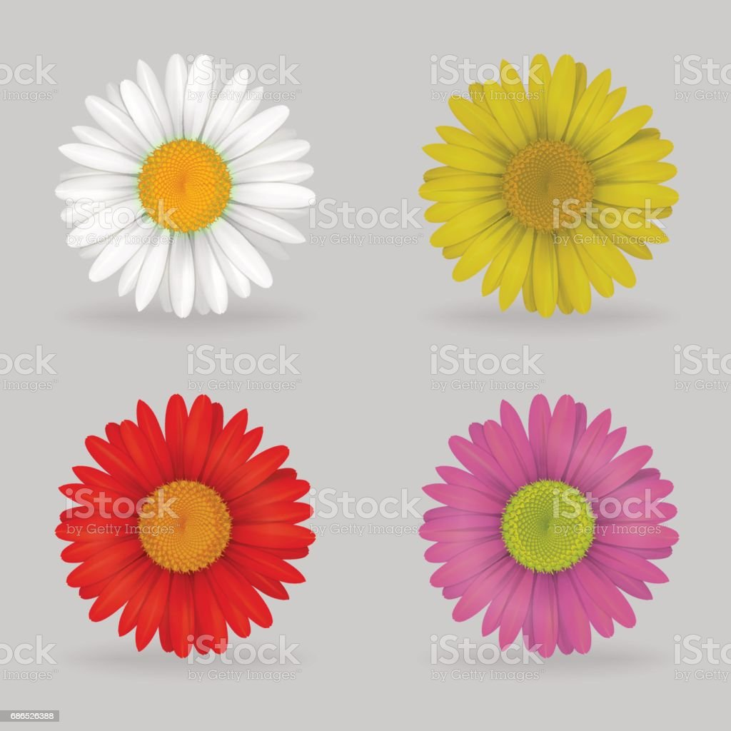 Vibrant Multi Color Lovely Daisy Chammomile Flowers Stock Vector Art