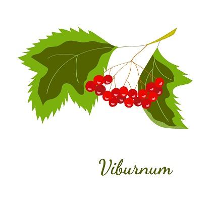 Viburnum color mon