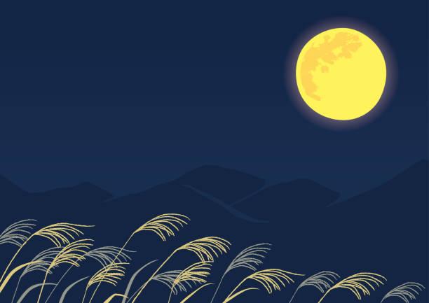 illustrazioni stock, clip art, cartoni animati e icone di tendenza di viewing the moon, tsukimi background illustration - miscanthus sinensis