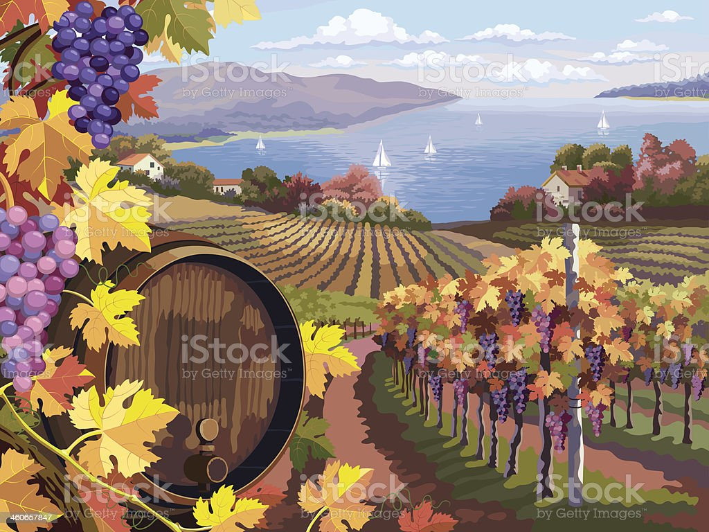 Vineyard and grapes bunches vector art illustration