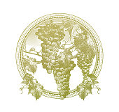 Engraved illustration of Vineyard grapes circle frame with flat design