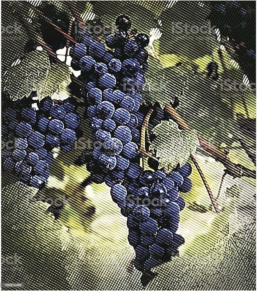 Vineyard Grapes royalty-free stock vector art