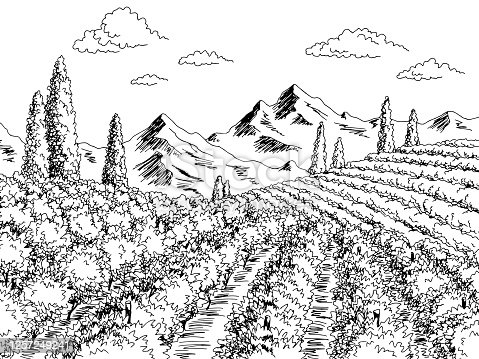 Vineyard graphic black white landscape sketch illustration vector