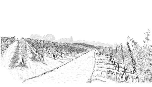 bildbanksillustrationer, clip art samt tecknat material och ikoner med vingård landskaps gård med byggnad på kullen. handritad skiss vektor illustration isolerad på vit - vineyard
