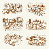Vineyard landscape. France or italy vintage village wine vineyards vector hand drawn illustrations. Winery landscape drawing, farm agriculture grape
