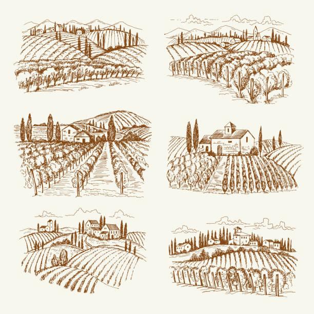 bildbanksillustrationer, clip art samt tecknat material och ikoner med vingård landskap. frankrike eller italien vintage by vin gårdar vektor handritade illustrationer - vineyard