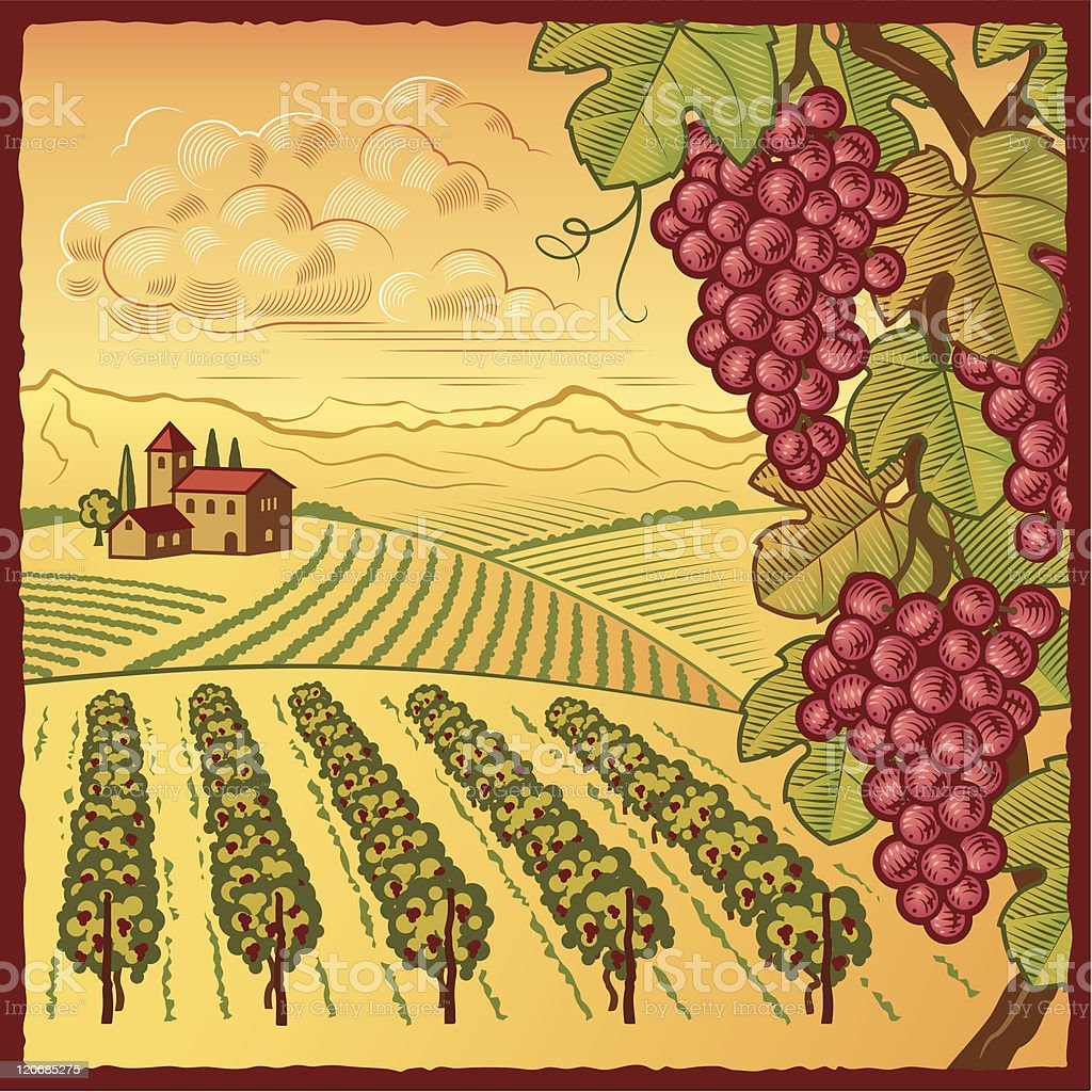 Vineyard landscape vector art illustration