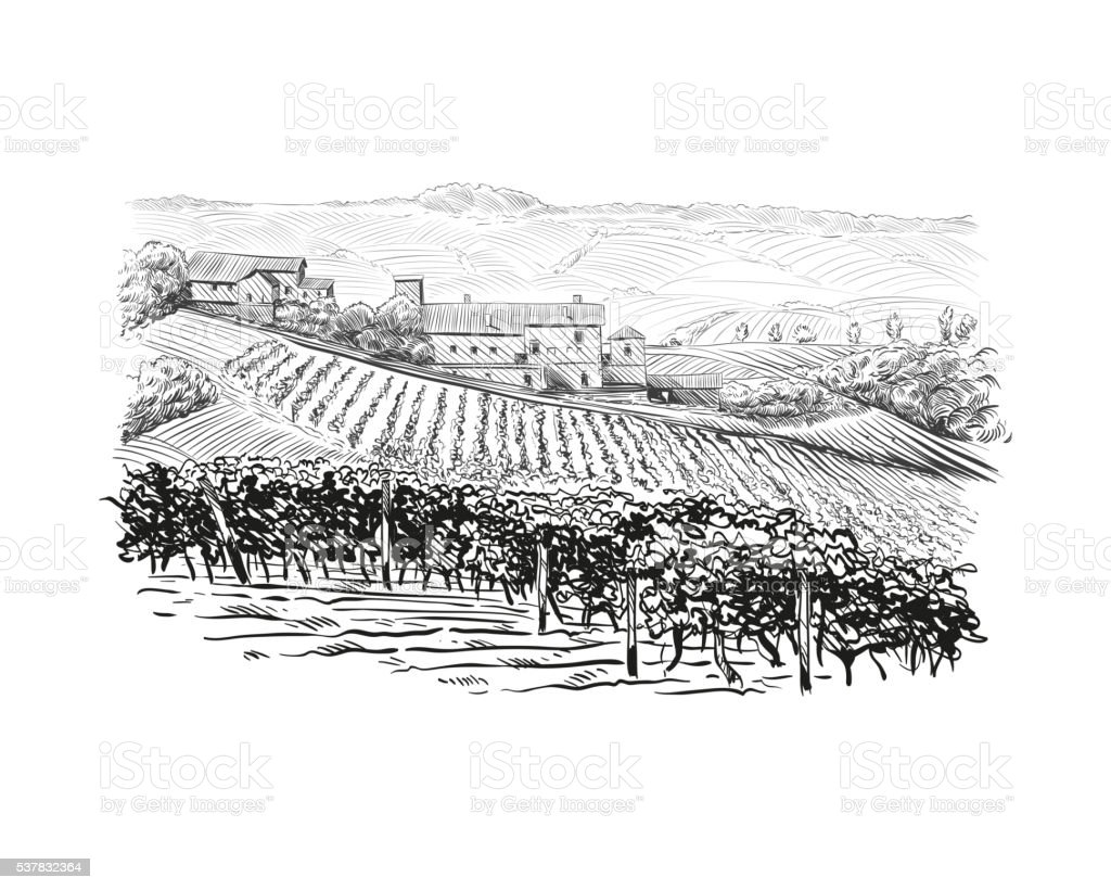 Vineyard landscape vector sketch design. Hand drawn illustration vector art illustration