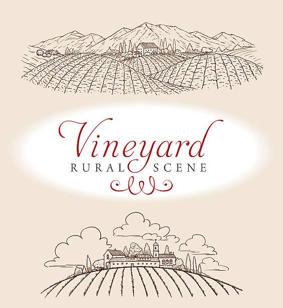 bildbanksillustrationer, clip art samt tecknat material och ikoner med vineyard rural scene - vinodling
