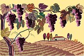Vector illustration, stroke color, with a style from an ancient engraving. In a hilly landscape, a farm in the background is surrounded by vineyards. Featured a plant filled with bunches of grapes mature, ready to be harvested.