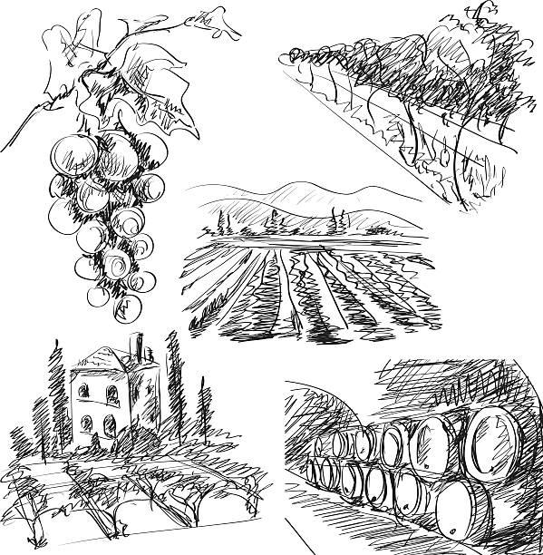 bildbanksillustrationer, clip art samt tecknat material och ikoner med vineyard - vinodling