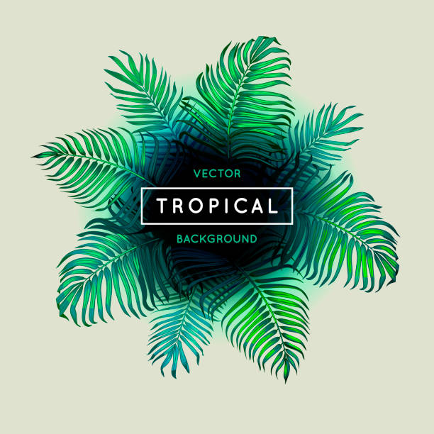 vintage abstract vector tropical background. palm leaves. exotic tree foliage. border. green foliage and text. jungle theme design template for banner or poster. frame. eps 10. - jungle stock illustrations
