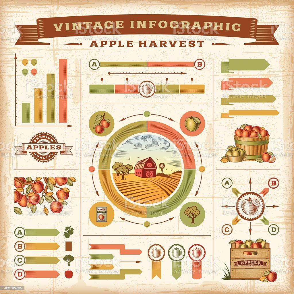 Vintage apple harvest infographic set vector art illustration