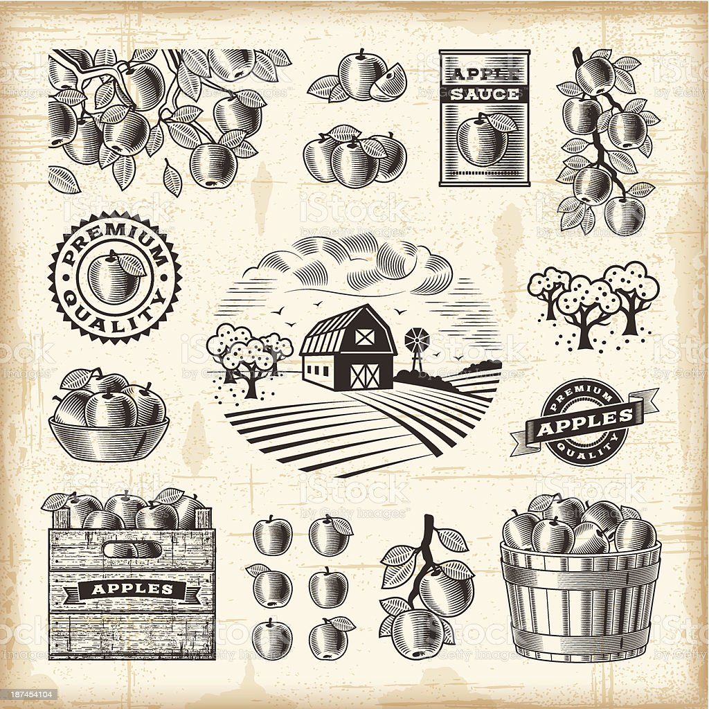 Vintage apple harvest set vector art illustration