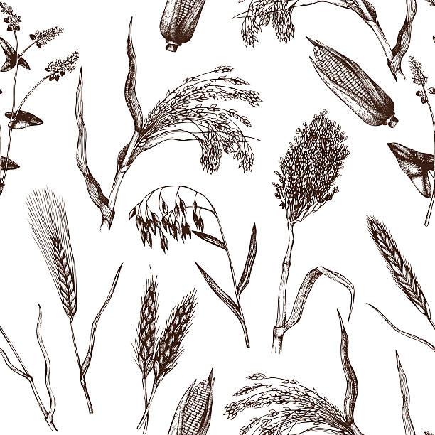 ilustrações de stock, clip art, desenhos animados e ícones de vintage fundo com culturas industriais; ilustração. - ilustrações de oats
