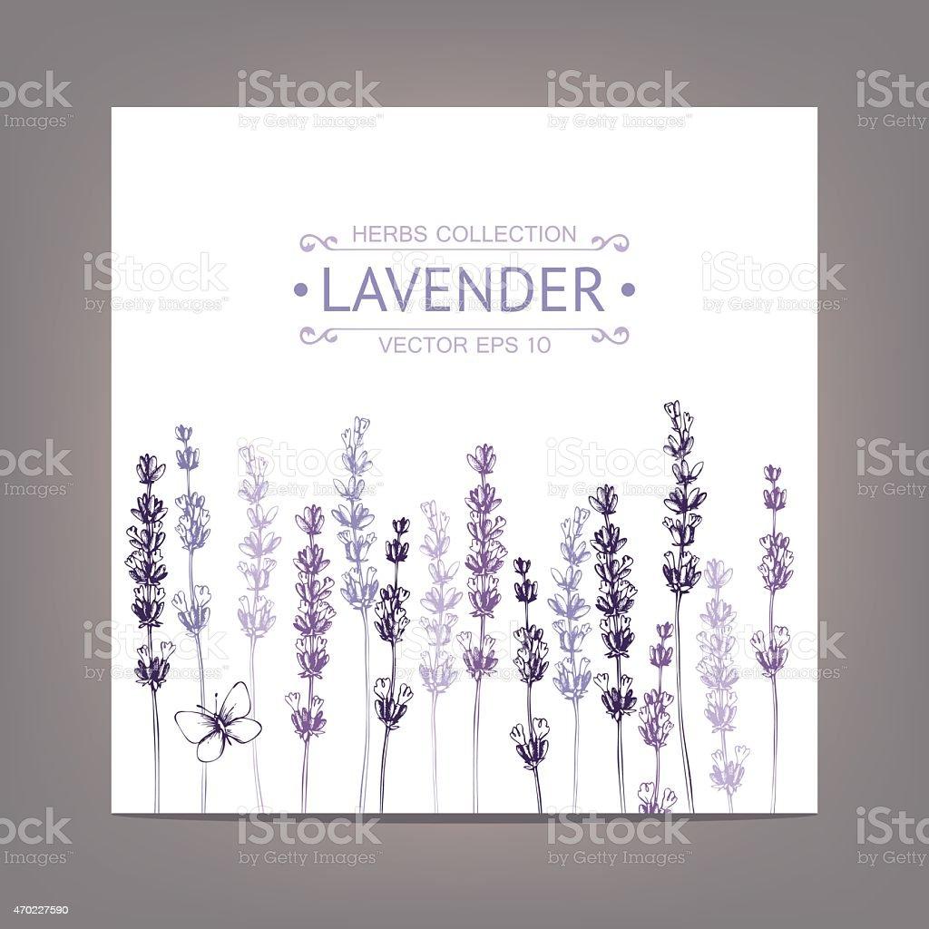 Vintage background with lavender flowers sketch vector art illustration