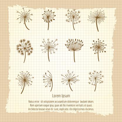Vintage botanical poster with dandelion
