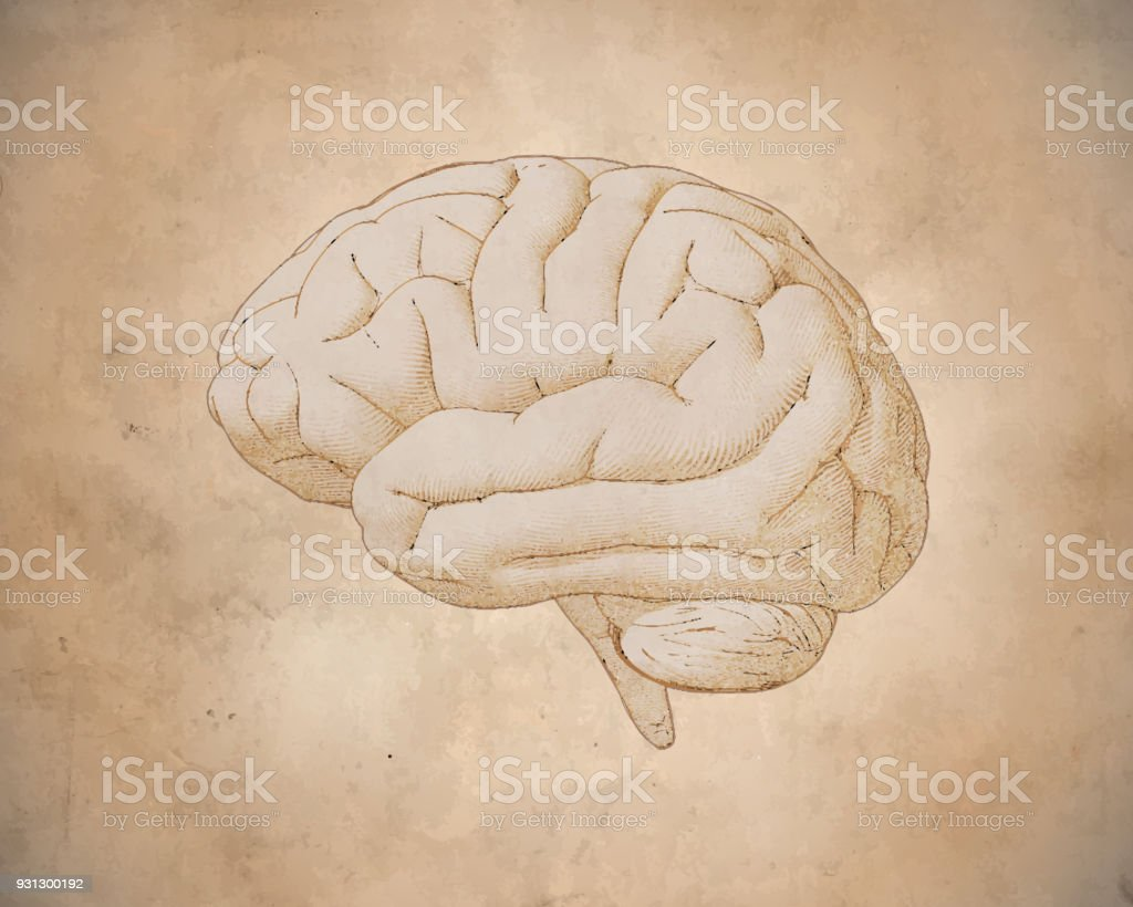 Vintage brain drawing with old paper texture vector art illustration