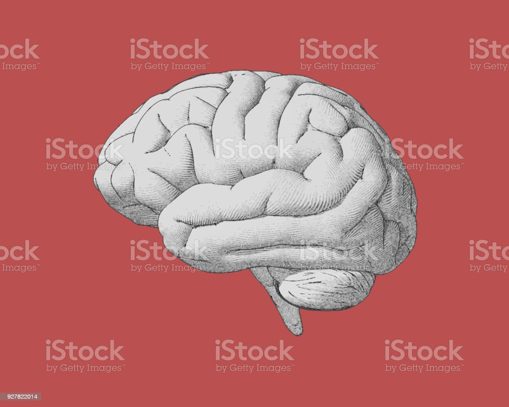 Vintage brain drawing with retro color style vector art illustration
